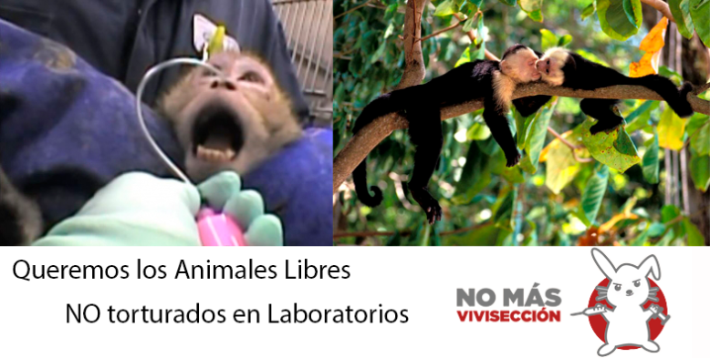 animales libres