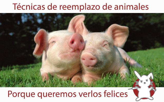 cerdos-felices1