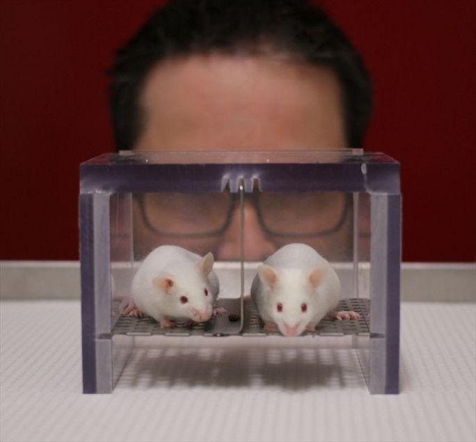cientifico ratas